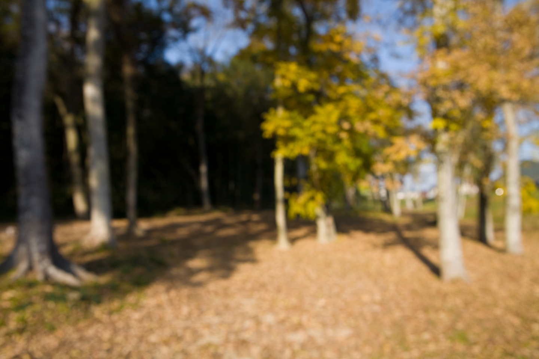 2008.12.10-05.jpg